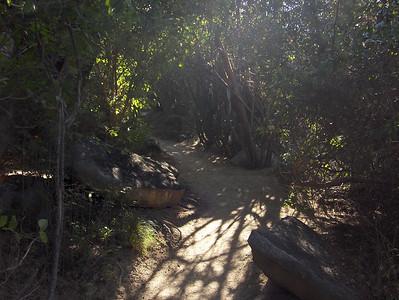 Virgin Gorda path to Devil's Bay